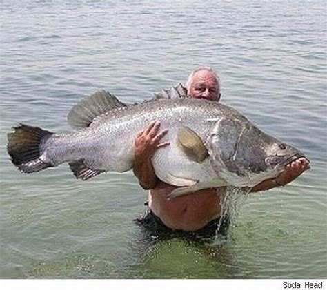 bid fish my amazing catch big fish by fisherman