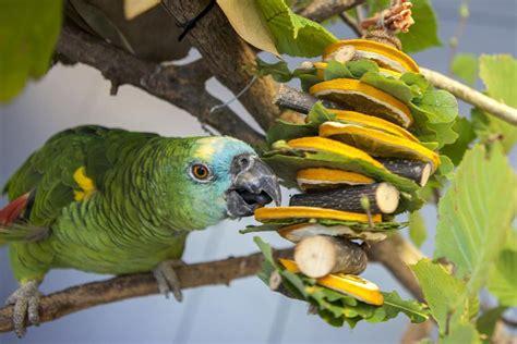 alimenti per pappagalli essiccare il cibo per i pappagalli