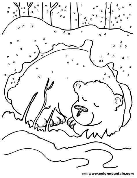 coloring sheets of animals that hibernate hibernating bear color sheet coloring page preschool