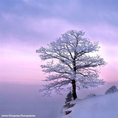 tree in snow best 25 snow covered trees ideas on winter