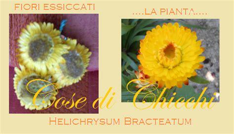 fiori di elicriso ghirlanda con decorazione di fiori di elicriso essiccati