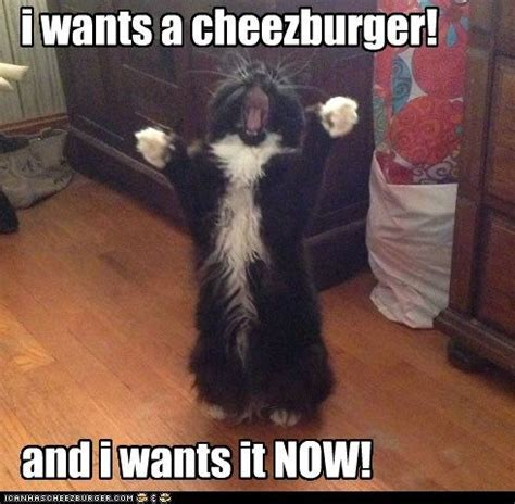 Meme Cheezburger - i can has cheezburger page 4 lolcats n funny pictures