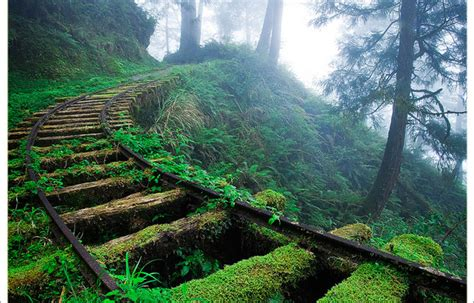 prettiest places in the us picture of the day overgrown railroad tracks in the