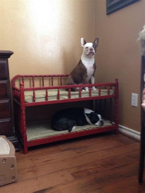 dog bunk beds for sale dog bunk bed enchanting wood dog beds 24 wooden dog bunk