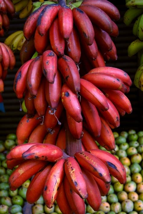 guide to six different types of bananas 7 varieties of bananas you should try on your next