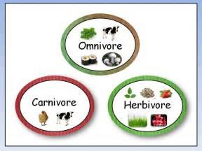 omnivore carnivore herbivore youtube
