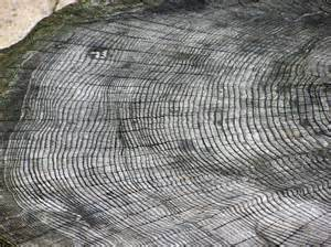 define tree file tree ring arp jpg wikimedia commons