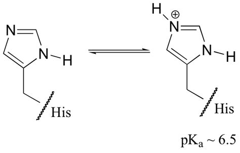 Protonated Histidine by 24 5 Biological Amines And The Henderson Hasselbalch