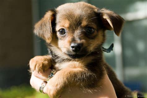petco puppy adoption image gallery petco adoptions