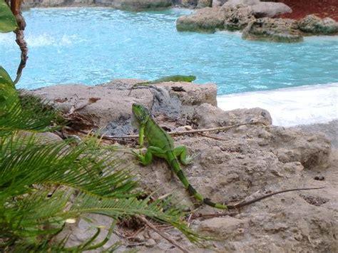 Sea Garden Pompano by Resort Picture Of Wyndham Sea Gardens Pompano