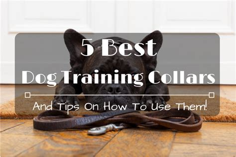 how to use a collar on a 5 best collars and tips on how to use them 2017