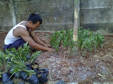 gajah mini tukang taman tanaman hias jasa taman