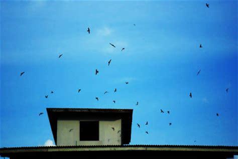 Buku Strategis Jitu Memikat Walet Masuk Rumah budidaya burung walet rumah burung walet sarang burung walet by mady walet kalimantan