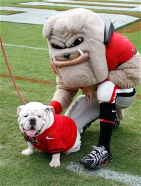 mascot monday: uga and hairy dawg | kc college gameday