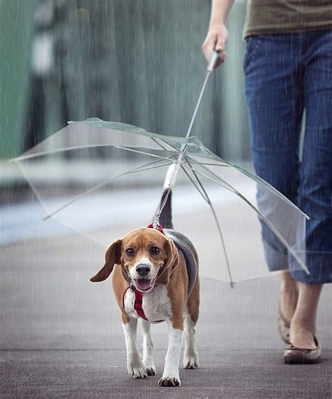 leash umbrella pet umbrella with leash 187 gadget flow