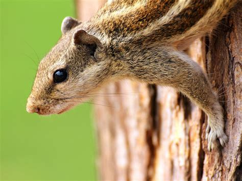 How To Keep Chipmunks Out Of Garden by How To Keep Chipmunks Out Of The Garden Hgtv