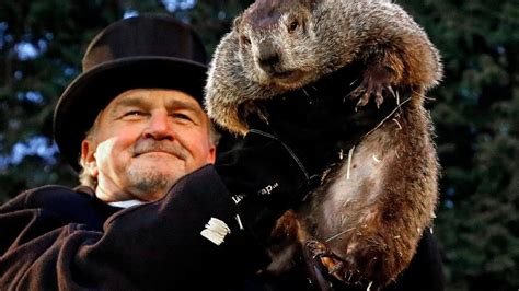 groundhog day rip offs live groundhog day s punxsutawney phil emerges to check