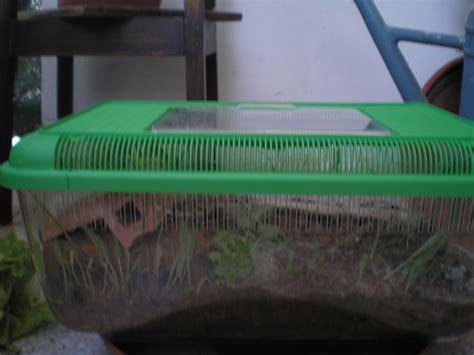 allevare lumache in casa le lumache di terra