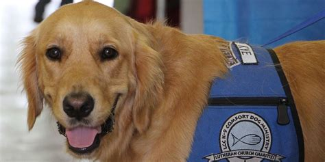 comfort dogs comfort dogs help orlando heal following shooting the daily dot