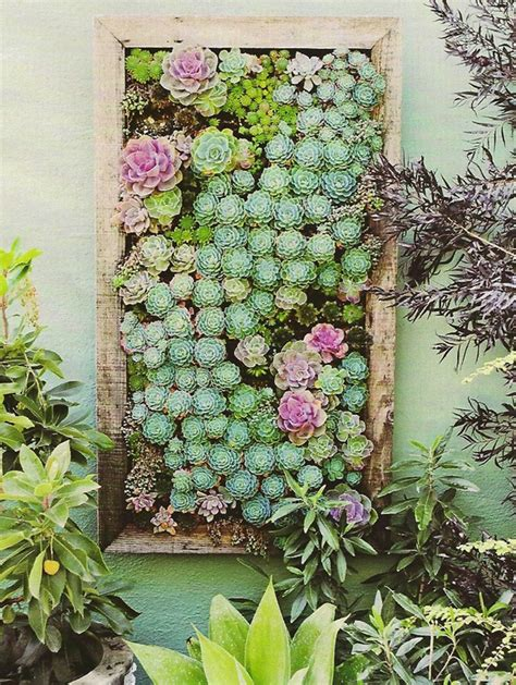 Succulents Wall Garden Ideas How To Make A Succulent Wall Garden