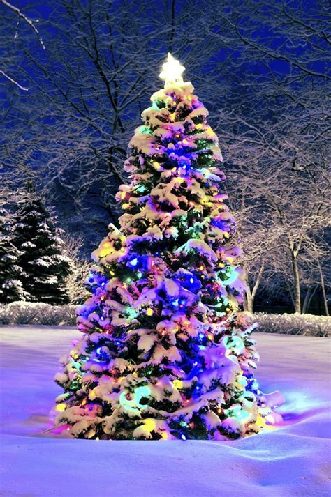Gallery Of Put Lights On A Christmas Tree Fabulous Homes Easy Way To Put Lights On A Tree