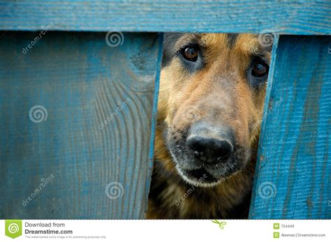 german shepherd dog house german shepherd dog house guard royalty free stock images image 754449