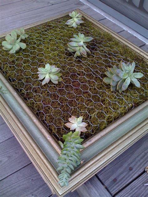 diy vertical succulent garden adorable home