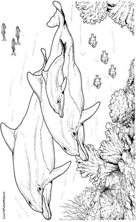 images  marine life coloring pages