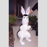 The House Bunny Cast   300 x 486 jpeg 27kB