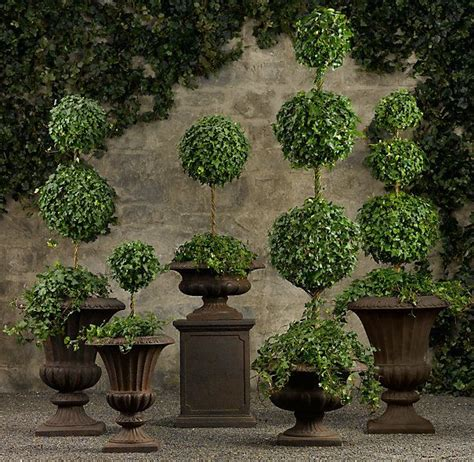 cheap topiary plants 17 best images about homestead wholesale tree nursery and