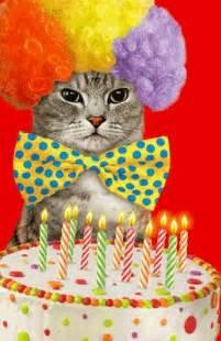 birthday cat ittude greeting card happy birthday