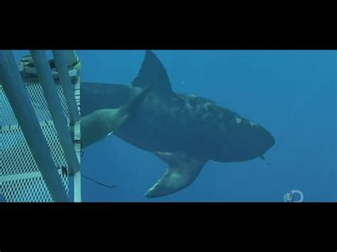 more megalodons caught on camera & spotted in real life