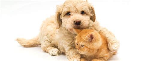 follada por su mascota videos de zoofilia de jovencitas folladas por su perro mascota mascotas