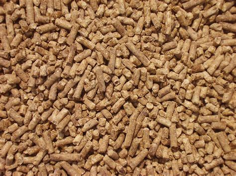 Premium feed beef buchheit agri