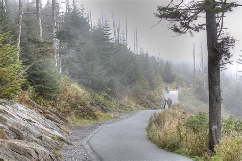 Cabins Near Clingmans Dome by Clingmans Dome What A View Gatlinburg Lodging Guide