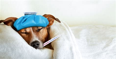 can dogs get sick signs your pet may be sick the furshire