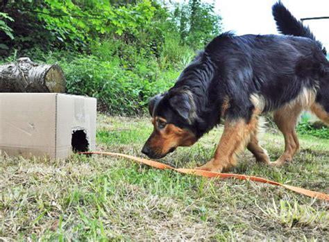 Hund Zieht Decke Weg by Spiele F 252 R Hunde Such Denk Und Bewegungsspiele Rund