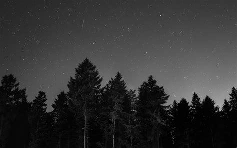 wallpaper pohon bintang gambar hitam dan putih langit suasana ruang