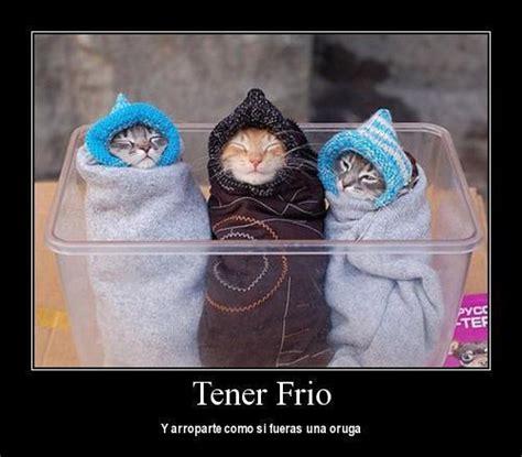 imagenes chistosas sobre el frio gatitos con fr 237 o gatos chistosos imagenes chistosas
