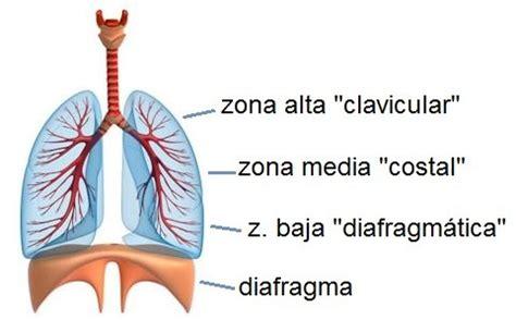 imagenes de respiracion yoga respiraci 243 n diafragm 225 tica c 243 mo practicarla t 233 cnicas de