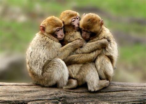 imagenes animales abrazados dia mundial de los animales tienen sus derechos