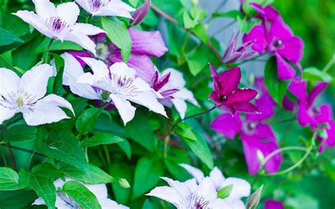 shade climbing plants 25 best images about shade garden plants on