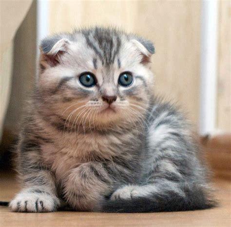 film kartun anak kucing kumpulan foto foto kucing imut gudang ilmu nurhaliza