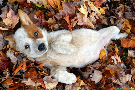 foster puppies foster puppy came to play in the leaves dogs cuteimages net