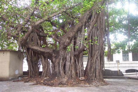 amazing tree amazing tree at the