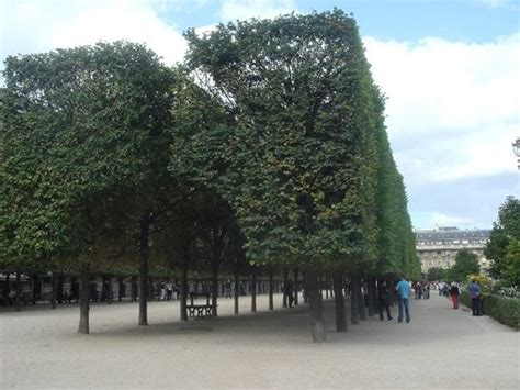 jardins du palais royal ce qu il faut