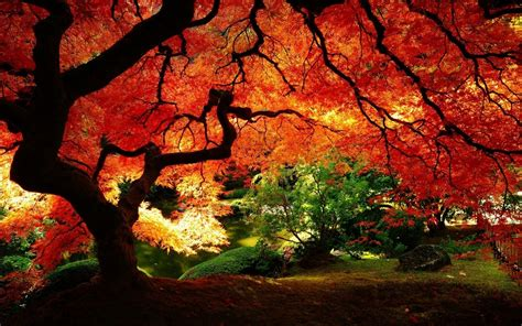 plantwerkz red maple tree acer rubrum