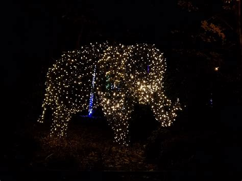 zoo light dc zoolights lights at the national zoo daycation dc