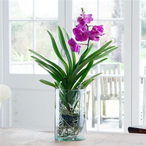 Vanda Orchids In Glass Vases by Vanda Orchid