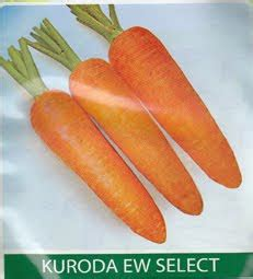 Harga Bibit Wortel bibit wortel kuroda ew select asli gombong